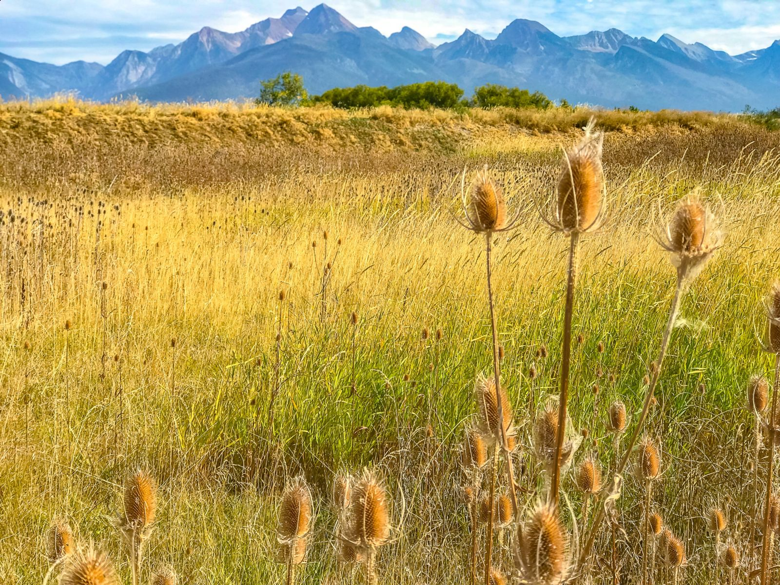 The Mission Mountains provide the backdrop at Ninepipe National Wildlife Refuge. Photo © Carter G. Walker.