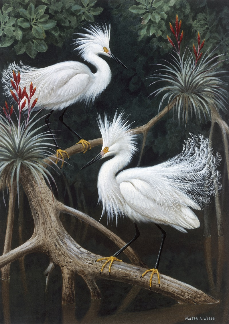 Everglades birds painting by Walter A. Weber