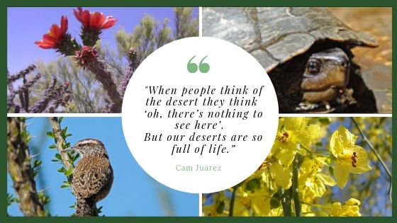 Deserts are full of life quote